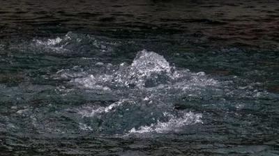 泉州生活廢水 動植物指標檢測