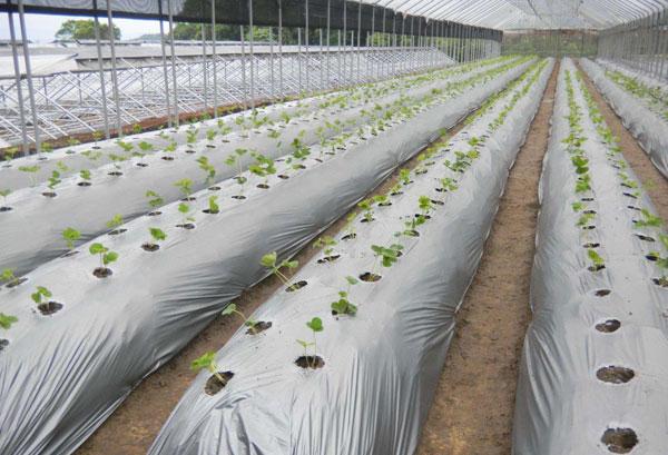 文章1-33-塑料農膜.jpg